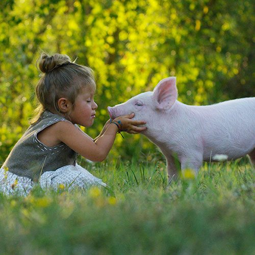 5 reasons to go vegan