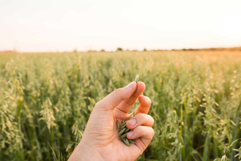 gluten free oats flannerys organics